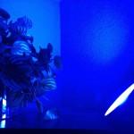 Mach die Welt ein wenig bunter,  mit den Philips Living Color Bloom